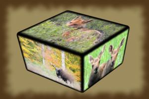 jess cube
