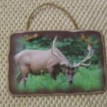 bill's elk